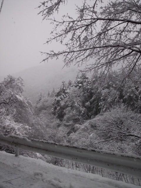 大雪です(+o+)