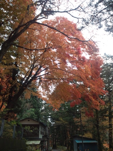 散り始めた紅葉